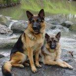 Най-разпространените митове за кучетата