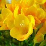 Пролетните цветя и някои интересни факти за тях