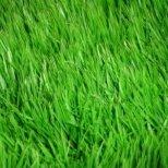 Как да отглеждаме ароматни треви и подправки на балкона и в градината