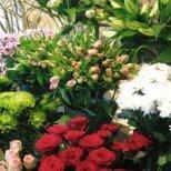 Грижи за стайните и градинските цветя през пролетта