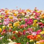 Какво можем да кажем с езика на цветята