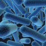 Вредят ли бактериите в устата на сърцето