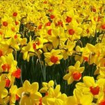 Как да се погрижите за цветята, които ще получите на Цветница