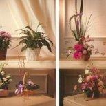 Как да се грижим за растенията вкъщи