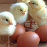 Какво трябва да знаем за яйцата