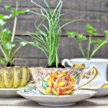 Кои полезни билки можем да отглеждаме вкъщи
