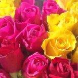 Как да отглеждаме рози вкъщи