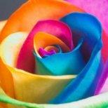 Каква роза сте-Тест
