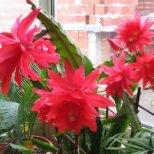Кои са грешките, които допускаме в отглеждането на цветята