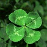 Най-популярните поверия за късмет