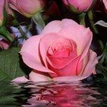 Каква е символиката на розата като подарък