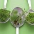С кои билки можем да отслабнем