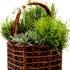 Как да берем и съхраняваме билките