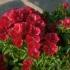 Как се отглежда Китайска роза