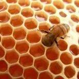 Как да изберем мед според нуждите ни