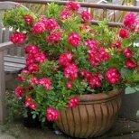 Как да се грижим за стайните растения