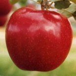 Кои са най-отровните съставки в храните, които купуваме