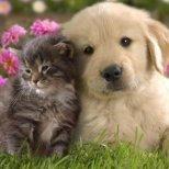Фън Шуй и отношението към котките у дома