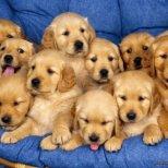 Фън Шуй и кучетата