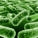 Какво не знаем за пробиотиците