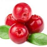 Целебните свойства на червената боровинка