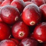 Невероятните качества на червената боровинка