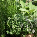 Как да повишим имунитета си с билки
