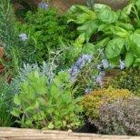 Как да събираме билки