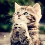 Как лекуват котките?