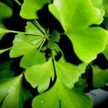 Кои билки понижават кръвното налягане