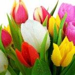 Какво означава бройката цветя в букета, който ви подаряват?