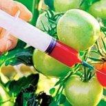 В кои продукти най-често се съдържа ГМО