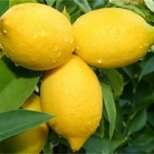 Диета с лимонов сок за 7 дни