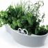 Как да отглеждаме билки и подправки в саксия