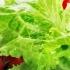 Свежа пролетна диета-отслабване 10 кг за 14 дни
