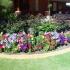 Хороскоп за Цветница-Кое цвете отговаря на зодията ви
