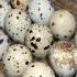 Лечебните ползи на яйцата от пъдпъдъци