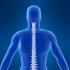 Как да се грижим за гръбначния стълб