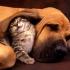 Уроци по кучешки и котешки език-Как да разбираме домашните любимци