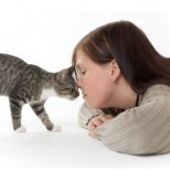 Как да разбираме по-добре котето вкъщи?
