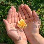 Как да разберем здравословното си състояние по дланите