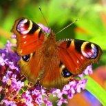 Суеверия с пеперуди и други насекоми