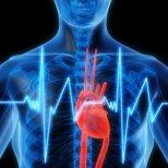 Билки, които помагат за здравето на сърцето