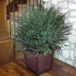 Стайни растения за приятен аромат вкъщи