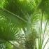 Растенията-санитари вкъщи