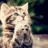 Как да си изберем котка