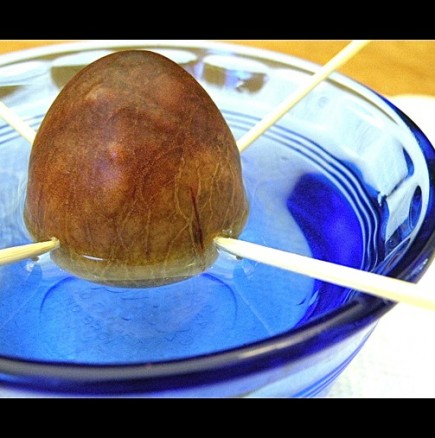 Как да си отгледаме авокадо у дома