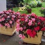 Как да се грижим за стайните ни цветя