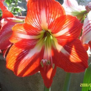 Цветя за настроение и лечение вкъщи