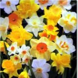 Пролетни цветя за пролетно настроение!